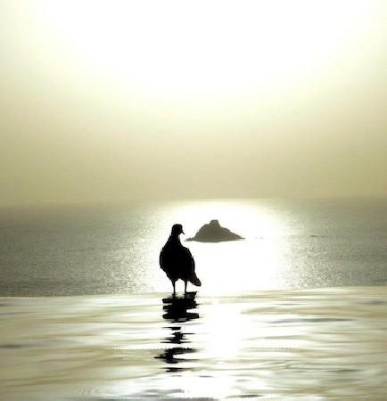 Par delà l'horizon lointain et infini, l'oiseau en clair-obscur a envie de prendre son envol, loin de son image floue et trouble, vers des cieux limpides et sereins. Métaphore d'un sujet qui devient ce qu'il est en revisitant le passé pour vivre son présent, avec conscience.
